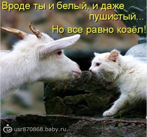 золотая ты моя золотая: