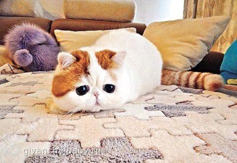 Самые красивые кошки в мире  LifeGlobe