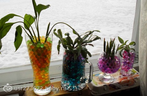 Можно ли орхидею сажать в гидрогель 78