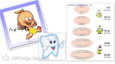 Режутся зубки: примерный порядок прорезывания, симптомы и как помочь ребенку