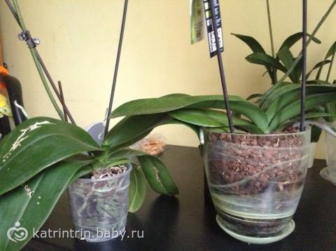 Какие горшки для орхидей нужны, как правильно выбрать емкость 25