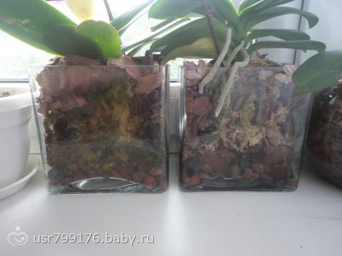 Стеклянный горшок для орхидеи