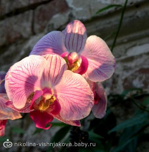 IV Зимний фестиваль орхидей и выставка суккулентов