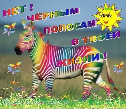про зебру пожелания с днем рождения так вышло можно