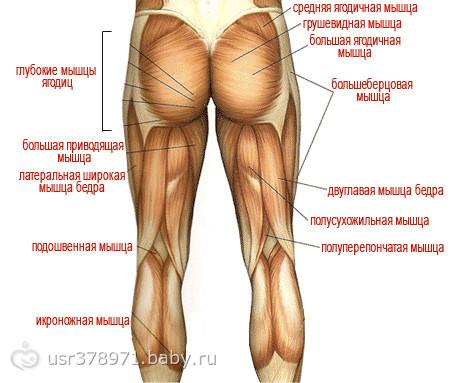 фото мышцы ног
