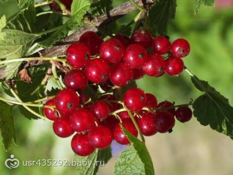 Как ягоды называются????????(фото)