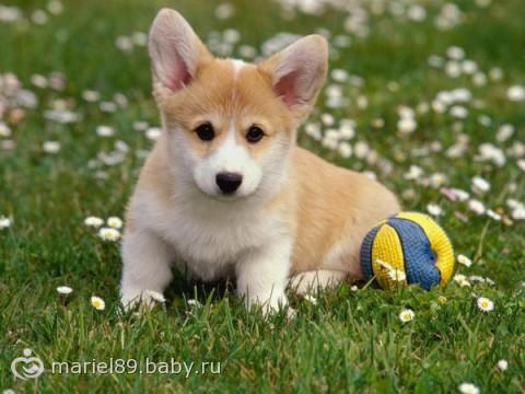 собаки для детей картинки
