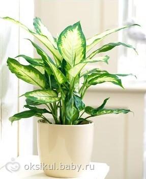 Подскажите пожалуйста, как называется это комнатное растение.