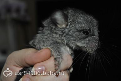 Детки нашей Шуши))
