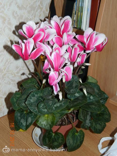Цветы в горшке цветущие