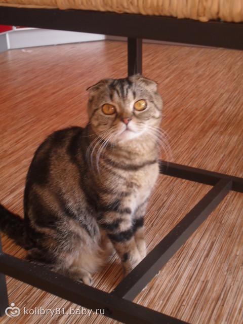 Арабелла,младший питомец в нашем доме