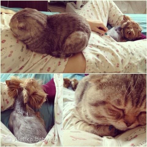 Кот и беременность