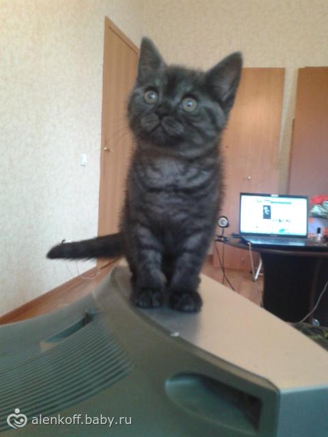 Новый член нашей семьи =)
