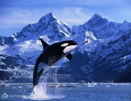 1235020682_whales_19
